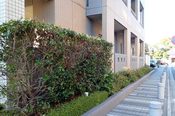 防犯優良マンションの外構:見通しの良い植え込みと歩道